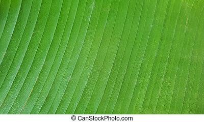 detail pattern of tropical banana leaves