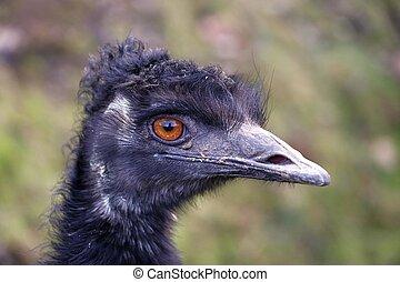 head of the emu