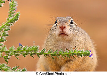 Detail portrait adult rodent in wild nature