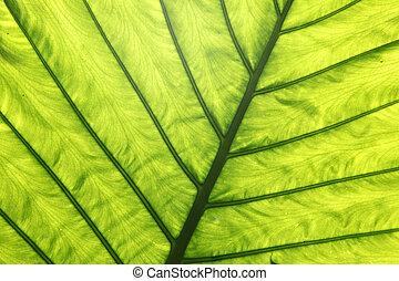 Detail shot of a green leaf