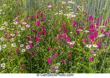 Detail shot of a wildflower meadow at summer time