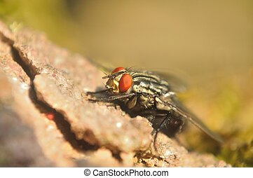 Detail shot of house fly