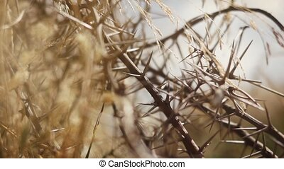 detail shot of shrubs in africa - macro shot of shrubs and...