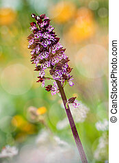 detail small orchid