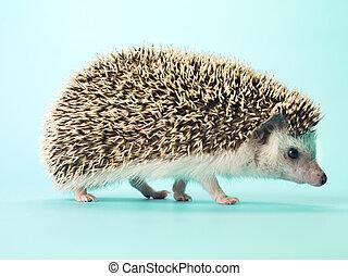 detail view of hedgehog - Detail view of hedgehog standing ...