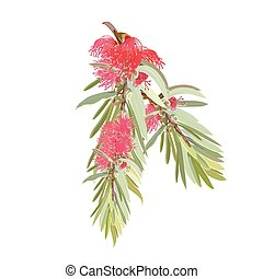 Detailed Bottlebrush Vector Red Design - Realistic Front...