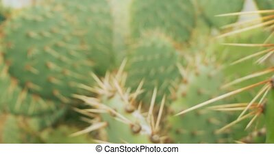 detailed extreme close-up of prickly pear cactus. natural background.
