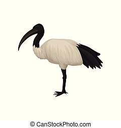 Detailed flat vector icon of ibis. Sacred bird of Egypt. Wild feathered animal with long legs and narrow beak. Tropical African fauna