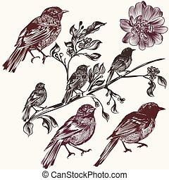 Vector set of detailed hand drawn birds for design