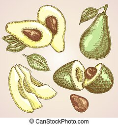 Detailed hand drawn fruit avocado. Vector illustration avocado plant. Eco food set