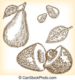 Detailed hand drawn fruit avocado. Vector illustration in sketch style. Eco food