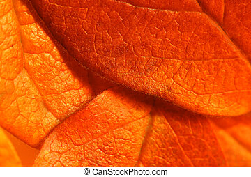 Detailed leaves