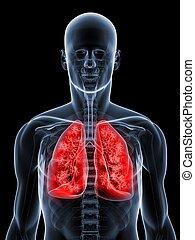 detailed lung - 3d rendered illustration of a transparent...