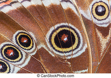 Detailed macro of tropical butterfly wing, brown and orange
