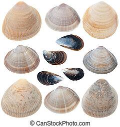 Detailed sea shells