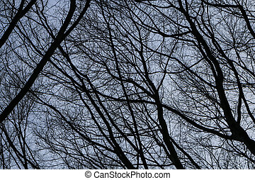 Detailed tree branches background