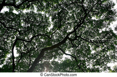 Detailed tree branches in park