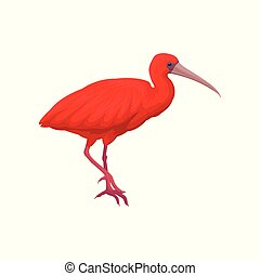Detailed vector illustration of scarlet ibis. Exotic bird with bright red feathers, narrow beak and long legs. Wild feathered animal