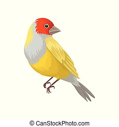 Detailed vector portrait of yellow lady gouldian finch with...
