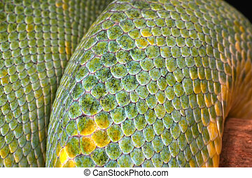 Detailed Closeup Of The Scales On A Green Tree Python Snake