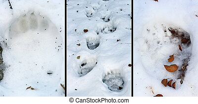details of bear tracks in snow