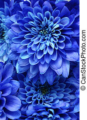 Details of blue flower for background or texture