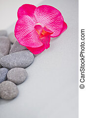 details of daily spa: pink orchid and stones