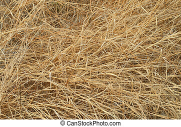 details of dry grass