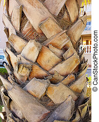 details of the trunk of a Palm tree