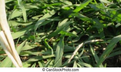 details., super, herbe verte, gros plan, fauché, pelouse