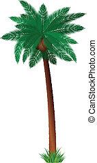 detalhado, árvore palma