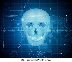 detalhado, anatomia, crânio humano