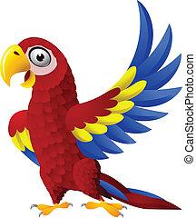 detalhado, engraçado, macaw, pássaro, caricatura