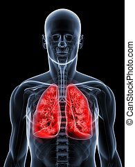 detalhado, pulmão