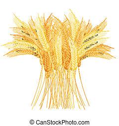 detalhado, trigo, maduro, set., isolado, template., orelhas