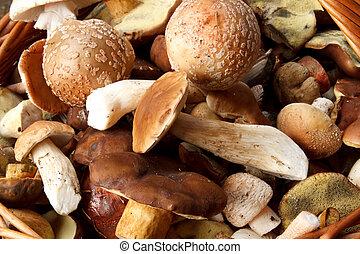 detalhe, de, fresco, outono, cogumelo