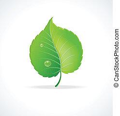 detaljerad, blad, illustration., vektor, grön, glatt
