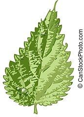 detaljerad, grön leaf