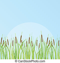 detaljerad, illustration, cattail, bakgrund