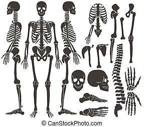 detaljerad, mörk, sätta, silhuett, skelett, collection., hög, vektor, svart, mänsklig, knotor, illustration.