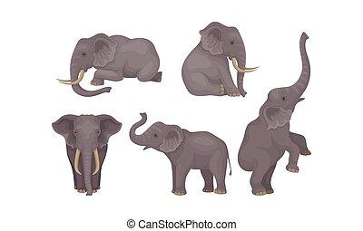 detallado, africano, inmenso, vector, mamíferos, realista, conjunto