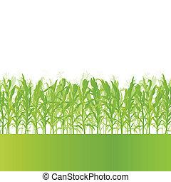 detallado, ecología, campo, maíz, ilustración, campo,...