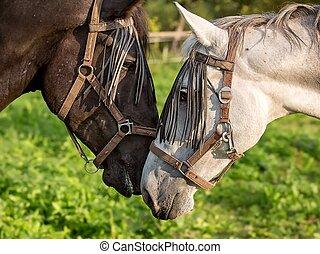 detalle, de, caballo, cabeza