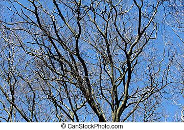 detalle, de, un, árbol