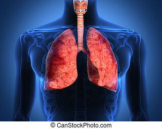 detalle, de, un, radiografía, de, pulmones, en, fondo negro