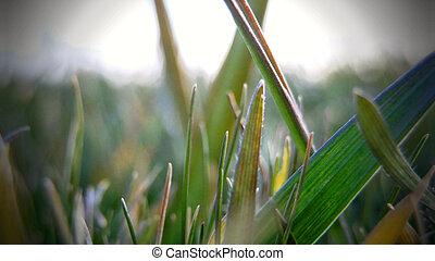 detalle, hierba verde