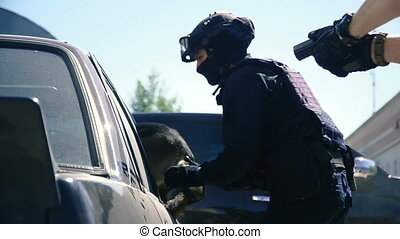 Detention of the criminal. The dog jumps into the car delays the criminal