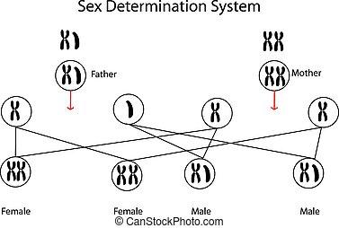 determinación, sexo