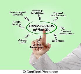 determinants, salute