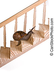 Funny snail slowly climbing a wooden staircase